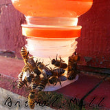 Bees Drinking Fountains