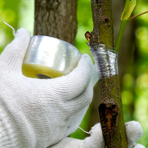 BIO-degradable Stretchable Grafting Tape