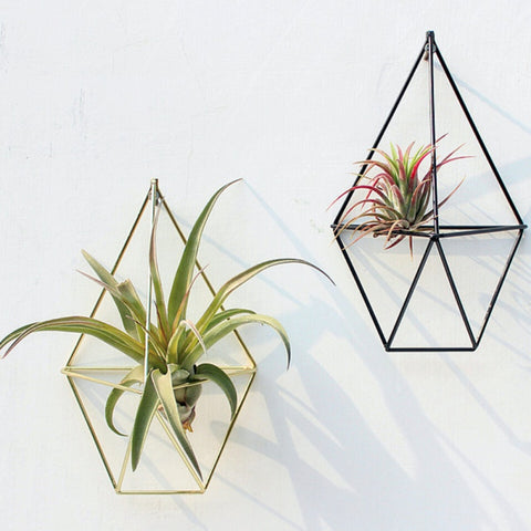 Geometrical  Wall  Ornament and Air Plant Holder
