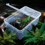 Plastic Reptile Transportation  Box