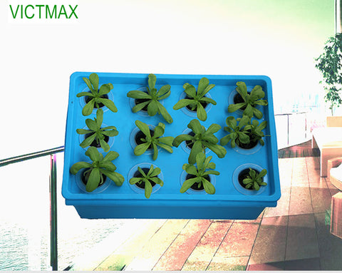 Hydroponic System Box With 12 Holes
