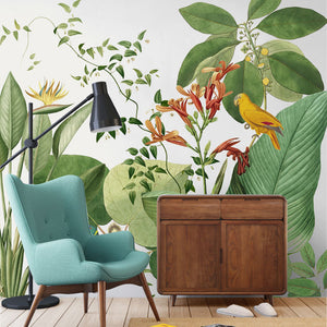 Birds of Paradise Tropical Wall Mural - Staunton and Henry