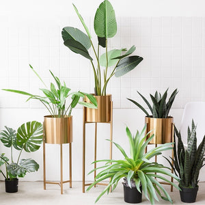 Modern Brass Plant Stand - Staunton and Henry