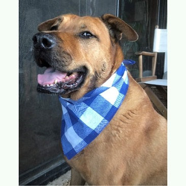 Checkered Out French Blue Dog and Cat Bandana