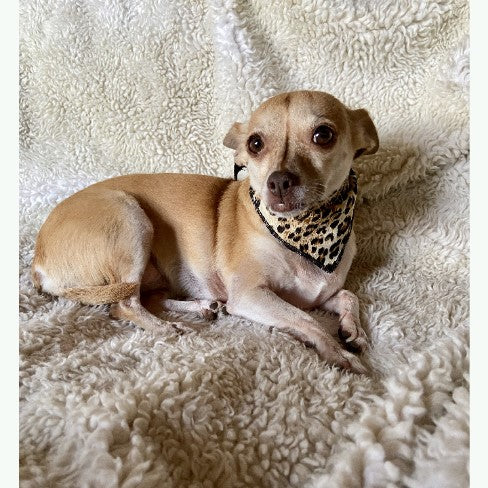 Leopard Print Dog and Cat Scarf