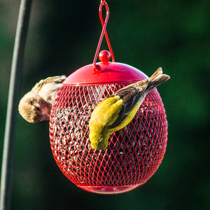 "910920-3 Pack Squirrel Proof Bird Feeders for Outside - 4.5"" Diameter - Red, Blue Yellow"