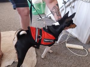 Assistance/Therapy Dog Vests to be worn with harness