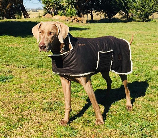 Oilskin Dog Coat - Extra Warmth
