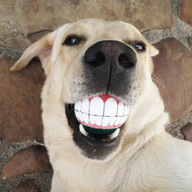 Funny Dog Grin Ball