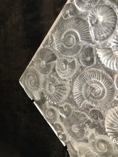 Cast Glass Ammonite Panel (Sculpture)