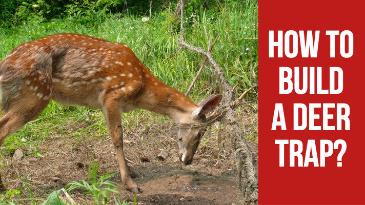 How to Build a Deer Trap?