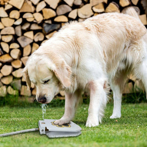Doggie Water Fountain Sprinkler Trending Vip