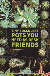 5 Unique Succulent Planters you Need as Desk Friends