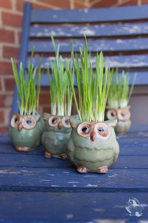 Wise Ceramic Owl Flower Pot for Succulents and Small Plants