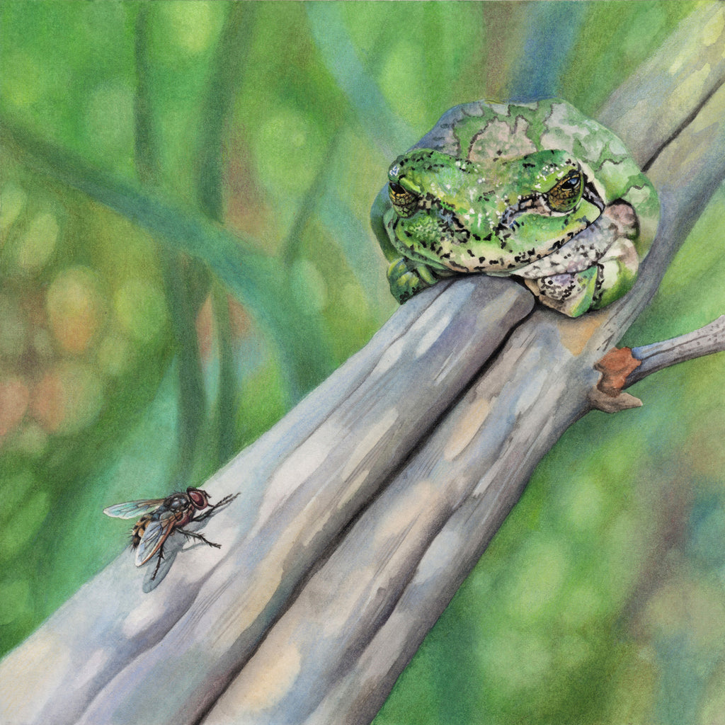 Let Sleepy Frogs Lie - Gallery