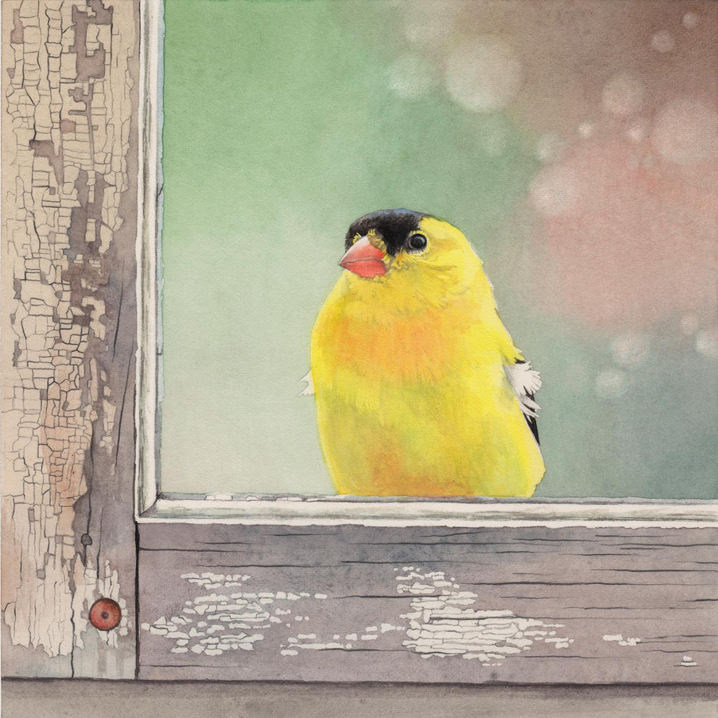 Window Finch - Gallery