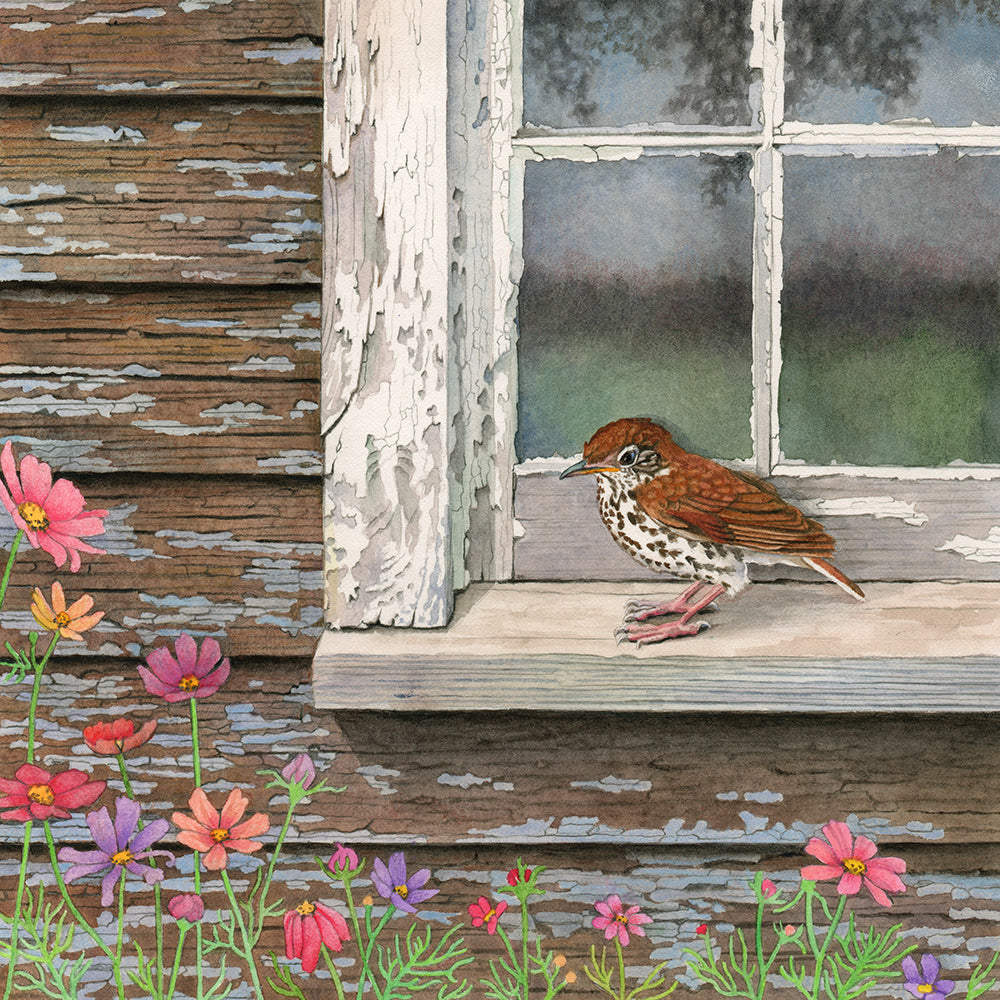 Wood Thrush at the Window