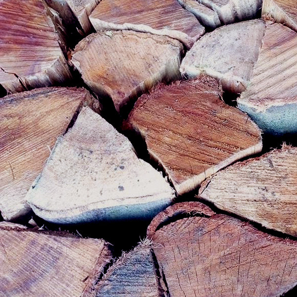 Black Wattle Bulk - Per 100 Loose Pieces or more - Wood Kingz