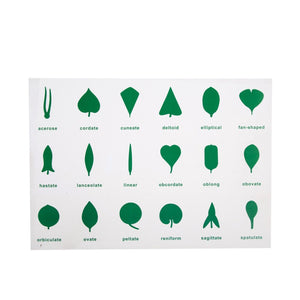 18KINDS PVC Leaf cards - Wonder Eduquip