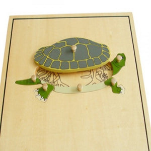 Turtle Skeleton Puzzle - Wonder Eduquip