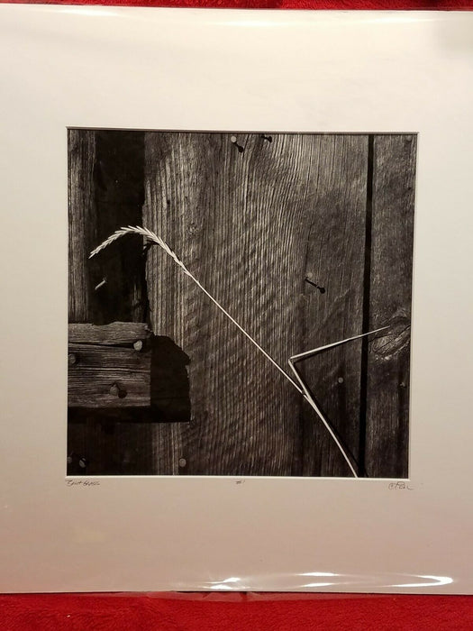 "Signed Matted 12 x 12 Black and White Photograph ""Bent Grass""  Barnwood & Grass"