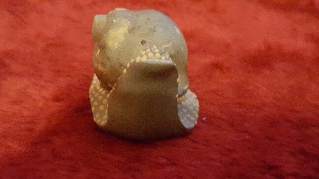 Antique China Folk Clay Life-like Snail Animal Statue w/ Chinese signature