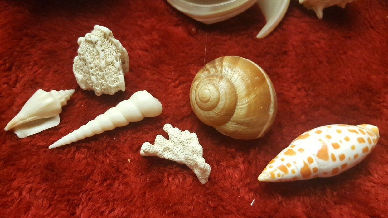 MIXED LOT OF GENUINE SEA SHELLS VARIETY