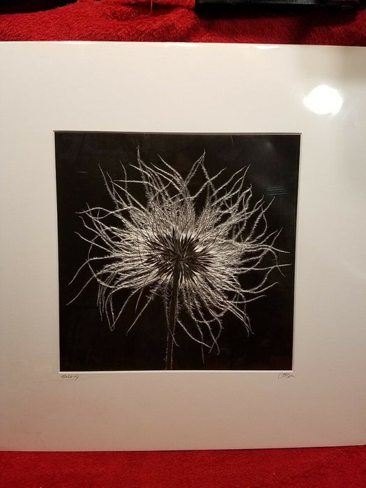 "Matted Signed Black & White Dandelion ""Salsify"" Photograph 12 x 12"