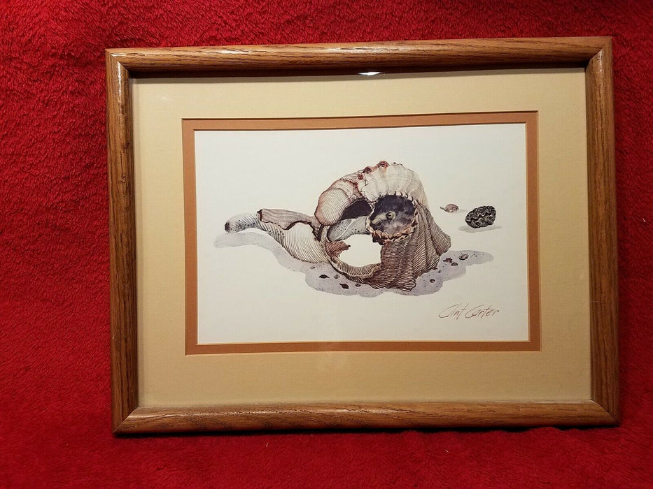 Clint Carter Conch Shell on Beach Print - Matted and Framed