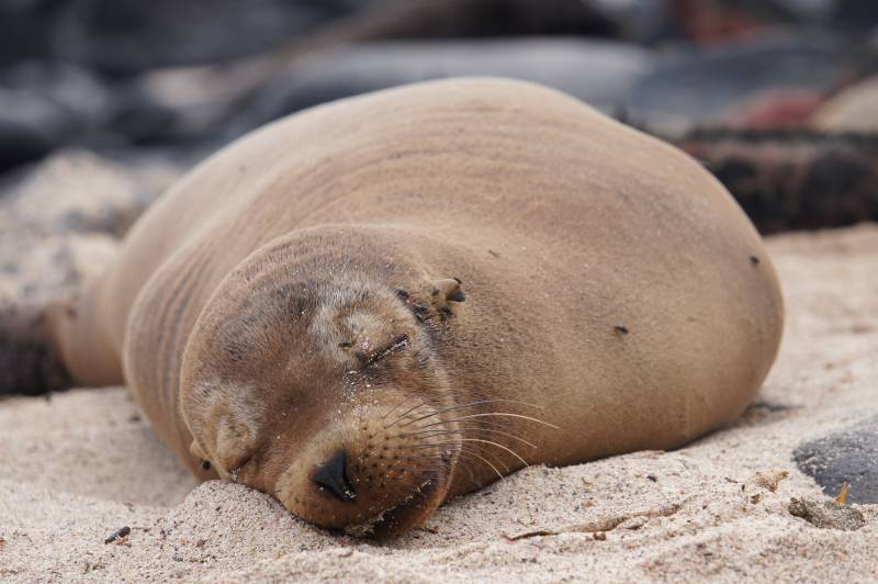 endangered seal sleep