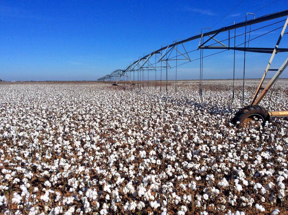 cotton field toxic chemicals environment