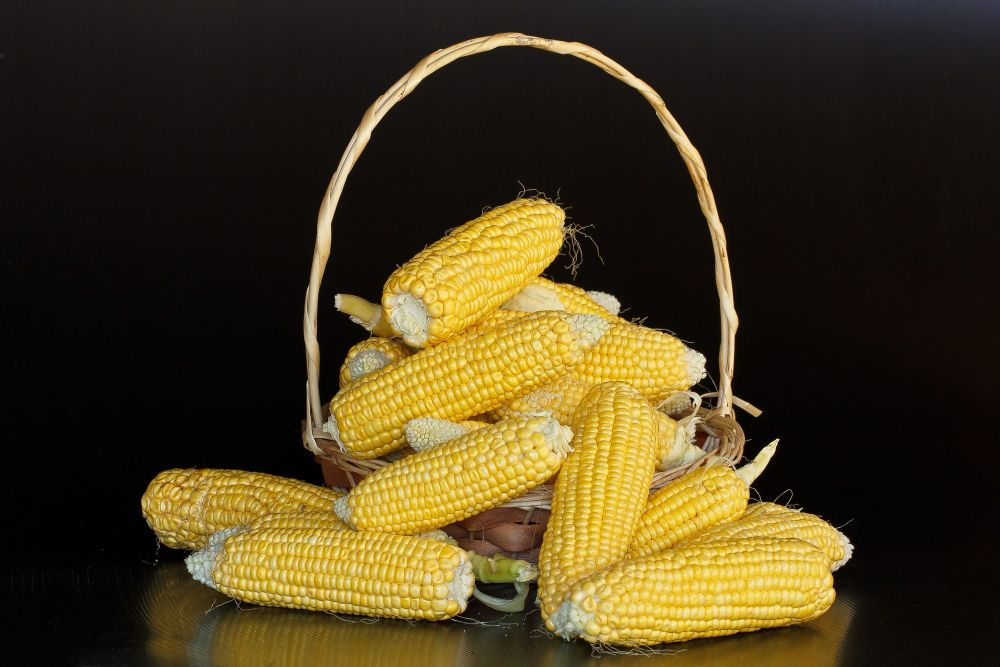 eco-friendly packaging corn starch