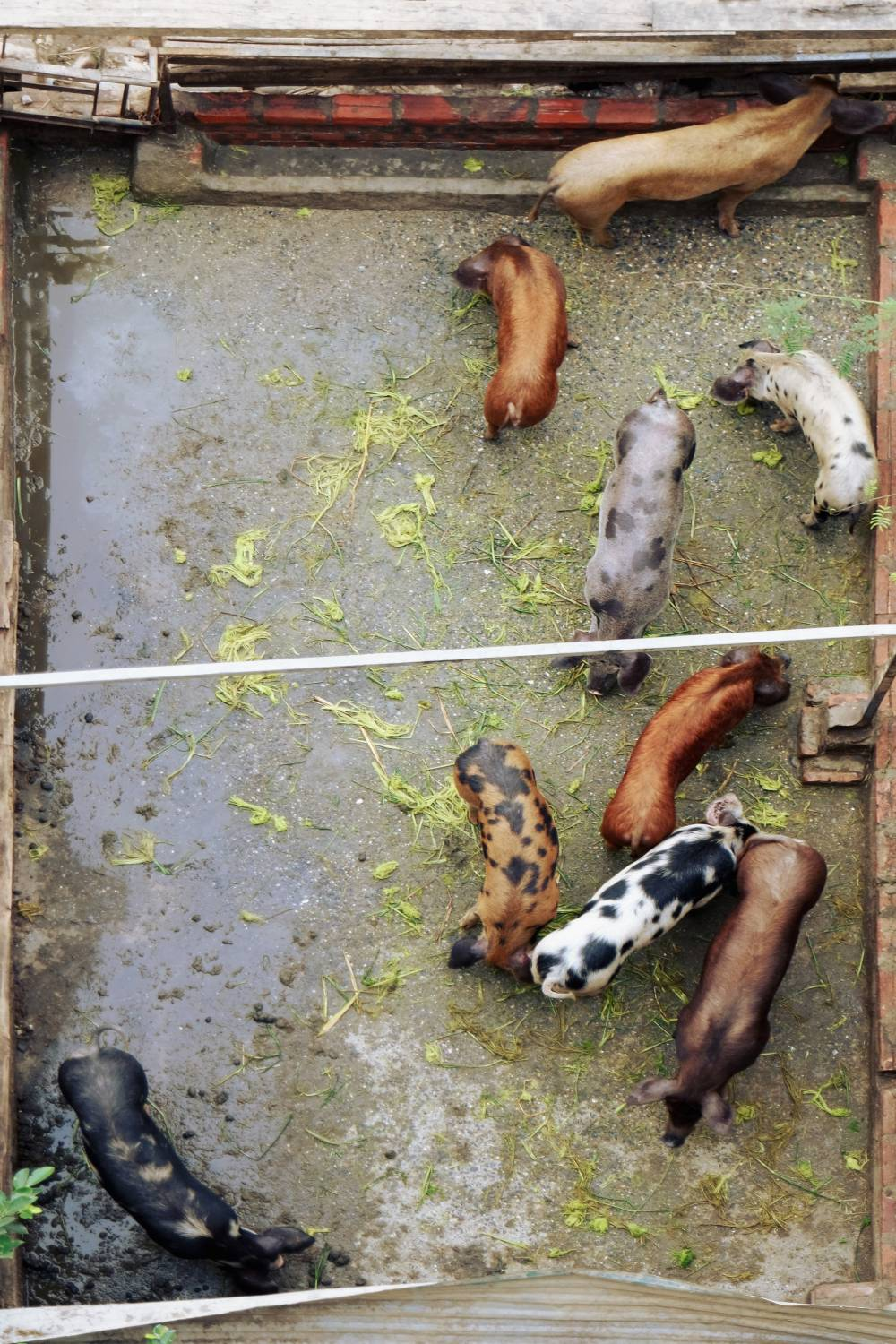 pig leather livestock farming pollution