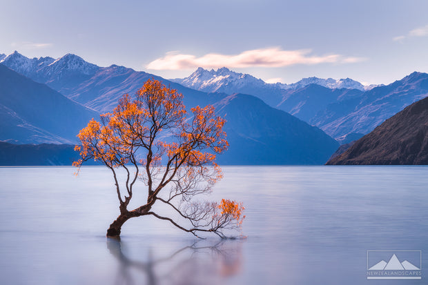The Lake Wanaka Tree - Newzealandscapes photo canvas prints New Zealand