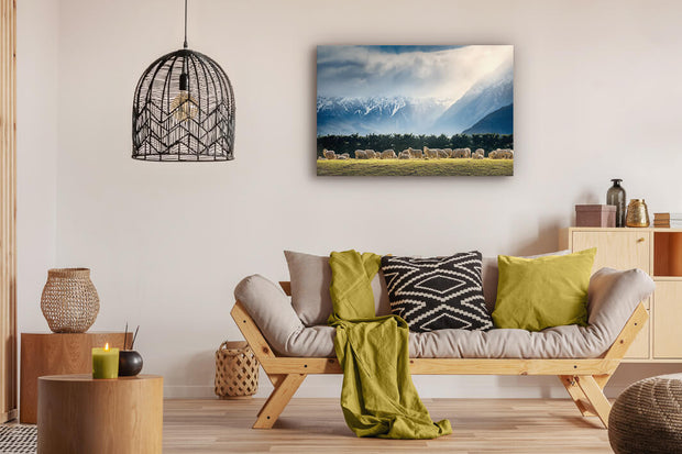 Sheep in a field wall art on lounge wall on canvas or photo print
