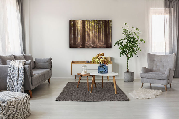 Photographic wall art of sunlit forest trees on a modern lounge wall