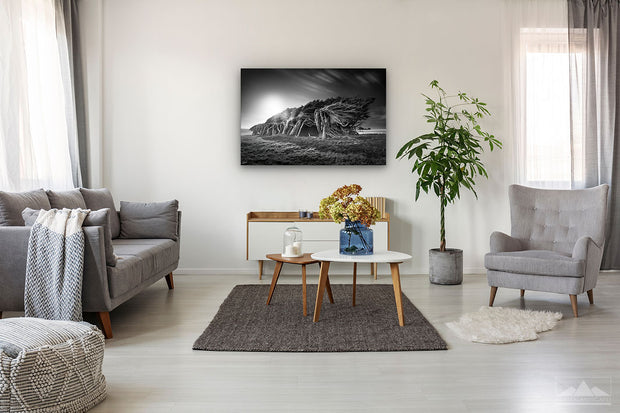 Photo print wall art of black and white windswept trees of Slope Point, New Zealand, on modern living room wall