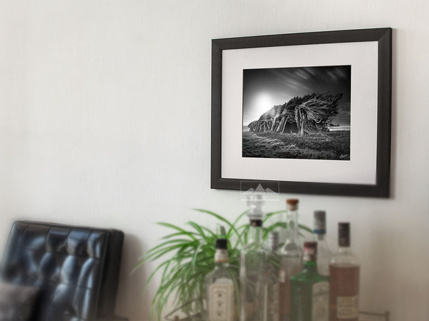 Framed photo wall art of black and white windswept trees of Slope Point, New Zealand, on modern lounge wall