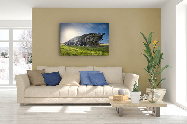 Photo print wall art of windswept trees of Slope Point, New Zealand, on modern living room wall