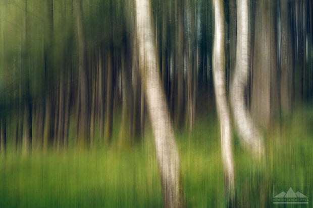 Artistic photograph of trees and grass in a forest, blurred for an abstract effect.