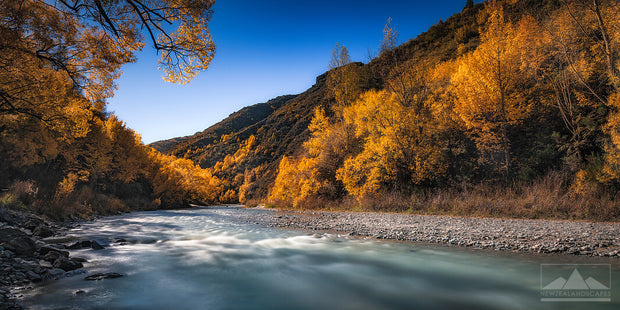 A panoramic image of the waters of the Arrow River flowing downstream, alongside trees with bright yellow autumn leaves.