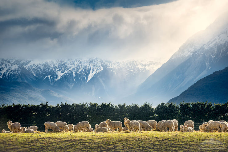 Photo or canvas wall art made in New Zealand