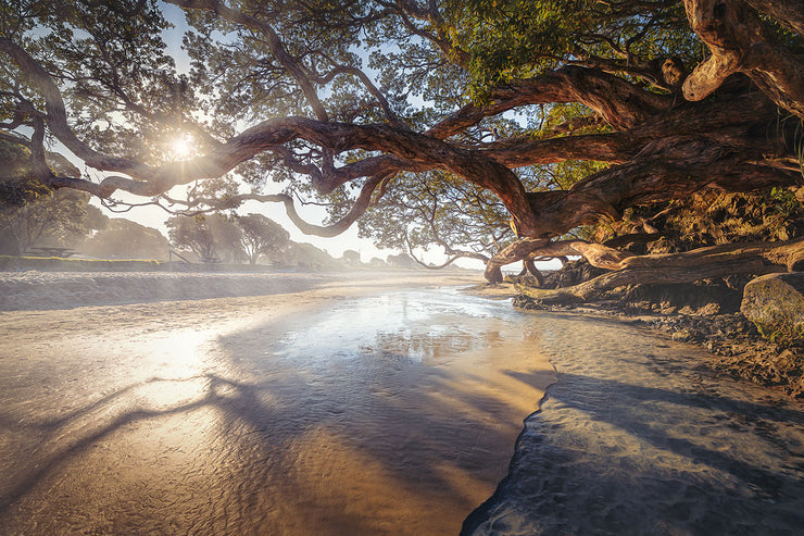 Landscape photo of sunset sunrays through tree branches at the beach