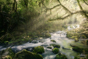 The Flow of the Riwaka Resurgence