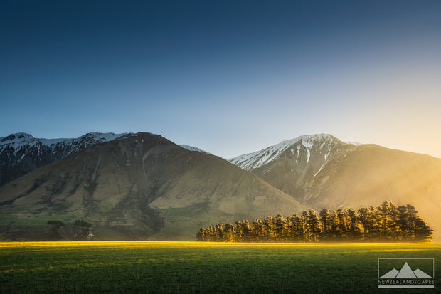 Sunlit Tree Strip - Newzealandscapes photo canvas prints New Zealand