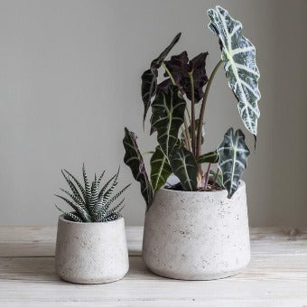 Cement Tapered Plant Pots - Stone Colour