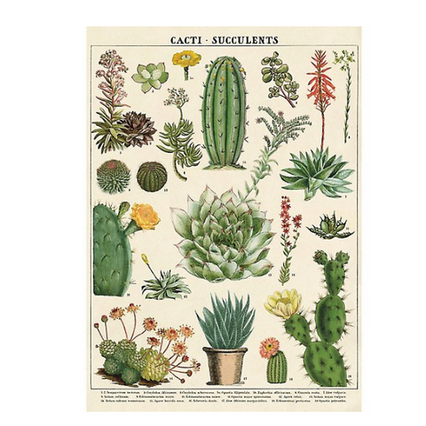 Cacti and Succulent Print