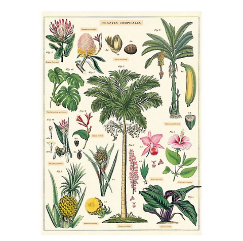 Tropical Plants Print