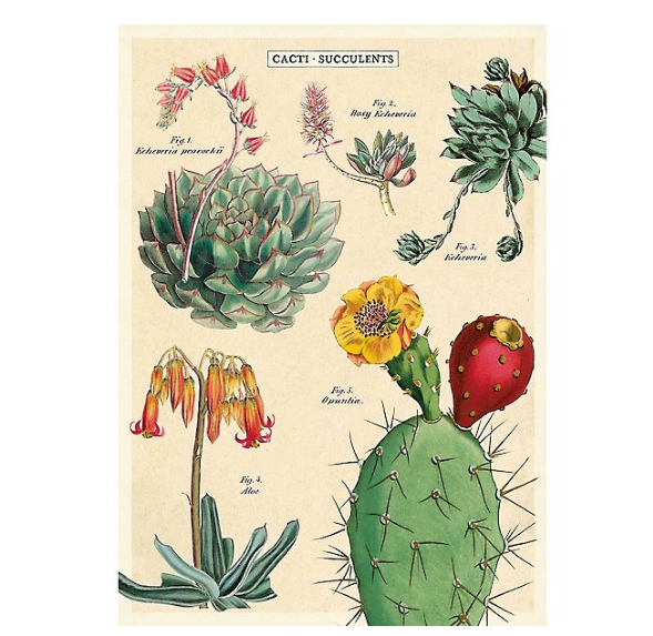 Cacti and Succulents 2 Print