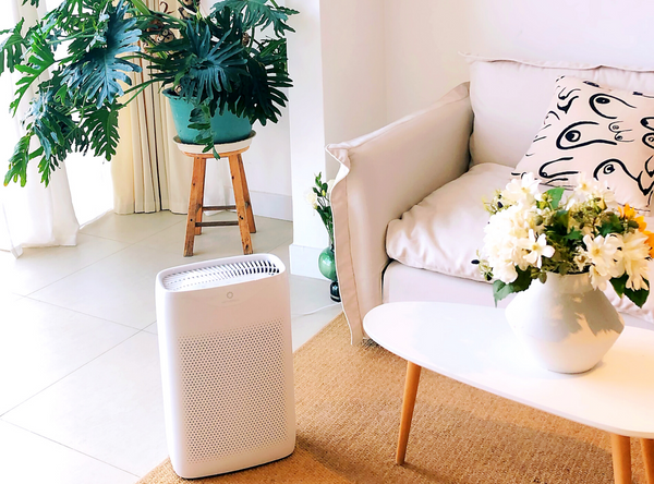 air purifier for spring allergies
